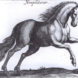 Il Cavallo Corsiero Napolitano