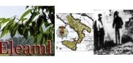 IL MUNICIPIO DI MILANO  e di Napoli