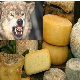 """La storia del formaggio Aurunco Vescino ed il problema dei """"lupi bastardi"""""""