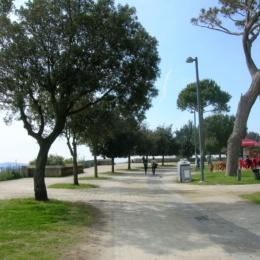 """Raccolta firme/""""Rivogliamo gli alberi a Posillipo"""": i cittadini fanno sentire la loro voce"""