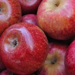 La mela Annurca il Mito