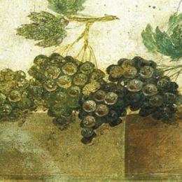 Scoperta a Mondragone una Villa Romana dove si produceva il Falernum