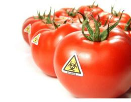 La Monsanto porta a Pachino i suoi pomodori OGM